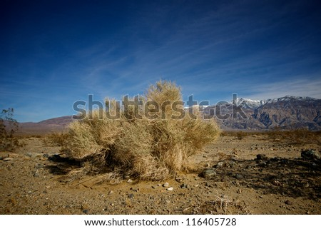 A large patch of creosote grows along the bottom of California's Death Valley National Park. - stock photo