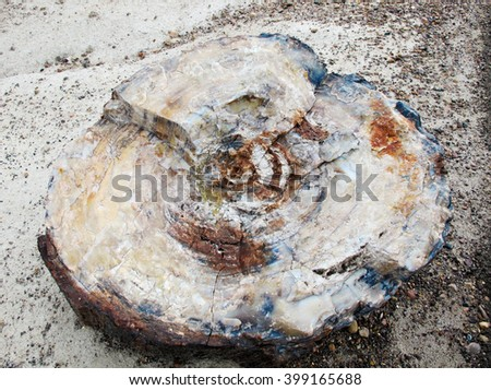 A large piece of wood that has been petrified through a unique mineralization process - stock photo
