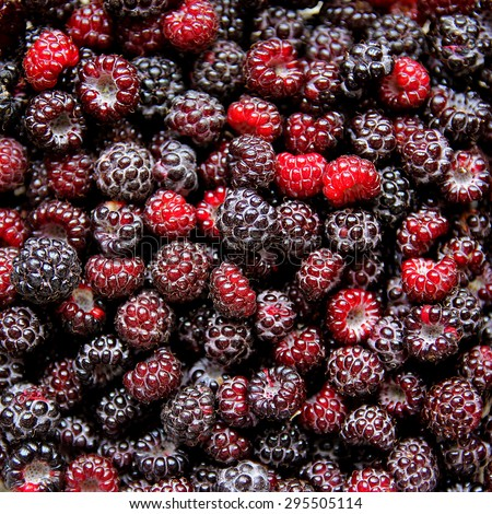 A large pile of freshly picked black cap raspberries in a fruit bowl - stock photo
