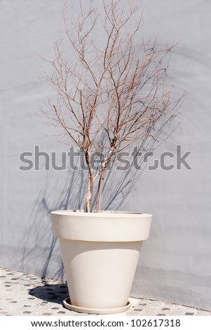 A large planting pot with dried plant - stock photo