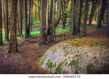 A large rock with moss in the woods - stock photo