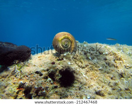A large sea shell in a beautifull background in the Waters of the Aegean Sea - stock photo