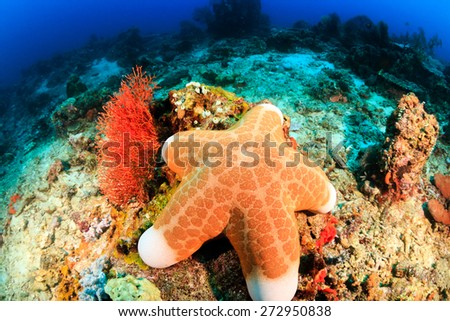 A large starfish sits on the seabed deep underwater - stock photo