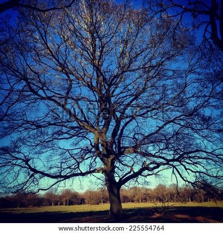 A large tree dominating the surrounding woodland area. - stock photo