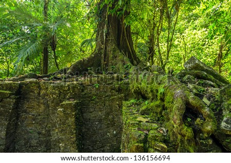 A large tree growing on top of ancient Mayan ruins in Palenque, Mexico