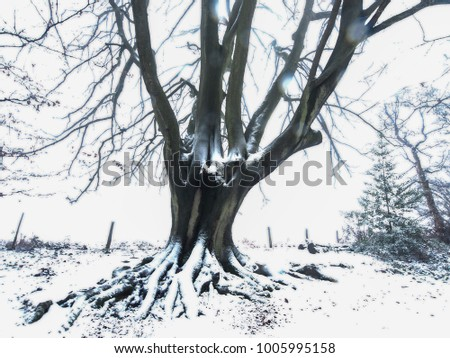 A large tree in a winter woodland after fresh snowfall in Herefordshire, UK. Overexposed for expression.