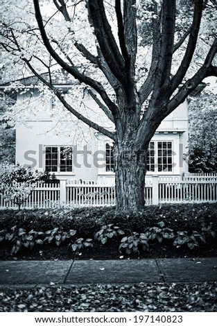A large tree in front of a house.