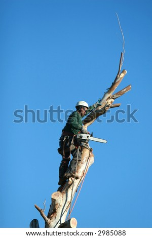 A large tree is being cut down by a man suspended ropes. All that remains now is the trunk of the tree.