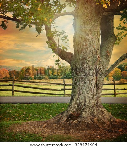 A large tree with changing colorful fall leaves is in a landscape with a wooden fence in the background for a season or nature scene. - stock photo