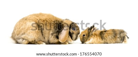 A larger floppy-eared bunny stares face to face with an identical smaller bunny.