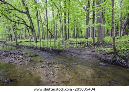 A lazy stream winds its way through the spring woods at Fullersburg Woods forest preserve in DuPage County, Illinois. - stock photo