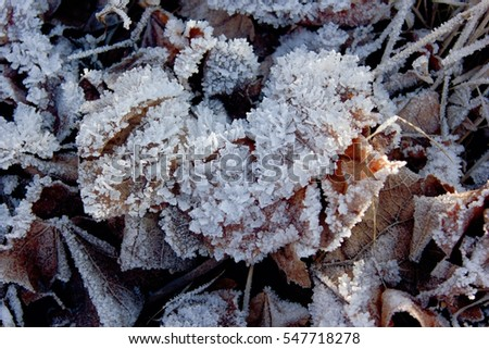 A leaf covered in hoarfrost.
