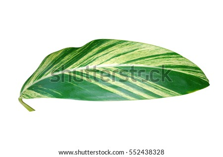 A leaf of green houseplant environment tree