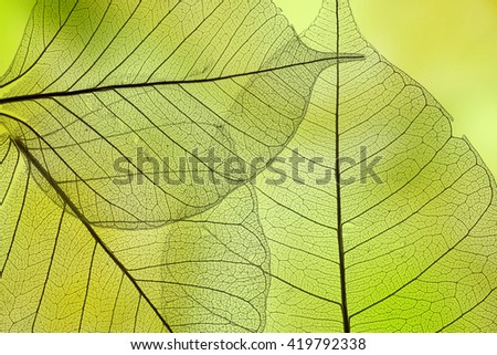 a leaf texture close up - stock photo
