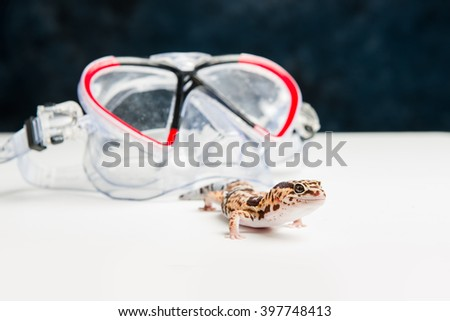 A leopard gecko next to some swimming goggles.