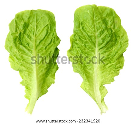 A lettuce leaf front and back, isolated on white background - stock photo