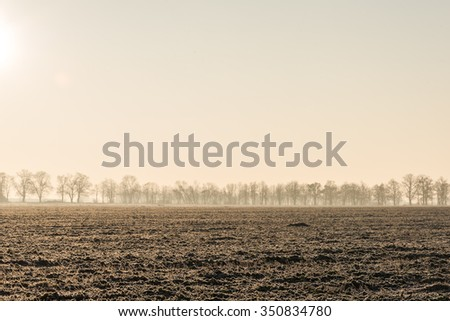 A line of a distant trees on a plowed field in a misty autumn morning