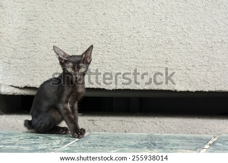 A Little Alley Cat Sit Helplessly on The Sidewalk. With Selective Focus on Its Head. - stock photo
