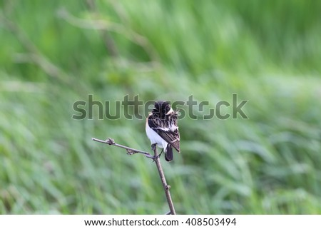 A little bird sitting on a branch of dry plants, while turning his head back