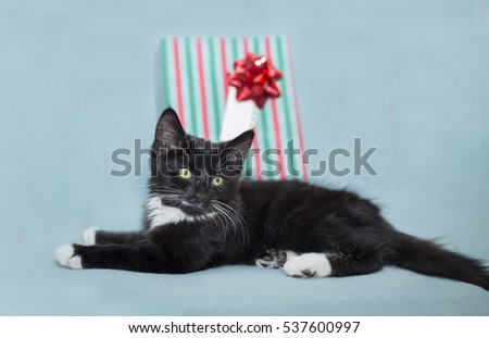a little black kitten on a green background with a red and green striped christmas  gift