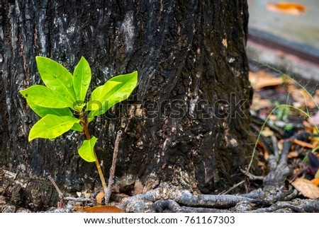 a little blurred of Young small plant tree growing from the ground with morning sunlight. new life begins concept. beginning of life concept.