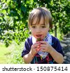 A little boy eating a blackberry at a fruit picking farm - stock photo
