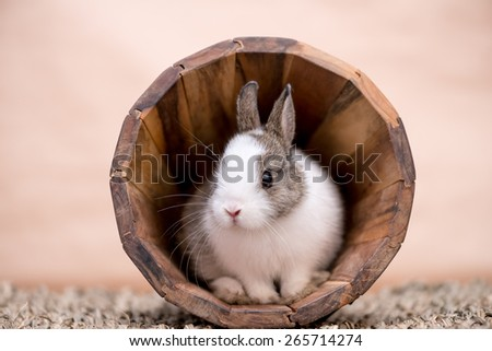 A little bunny in a wooden pot sitting still - stock photo