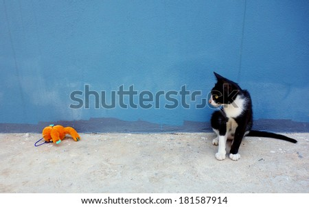 A little cat is looking the toy - stock photo