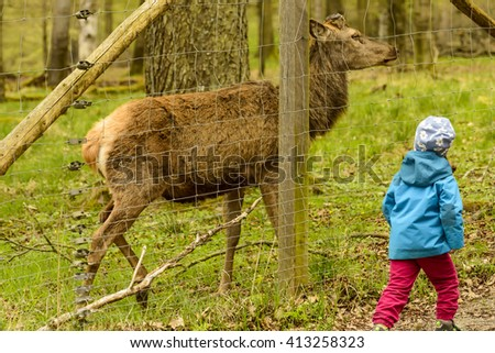 a little child follows a dear  near an enclosure  in city park, Stuttgart