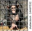 A little chimpanzee behind bars in a big city zoo - stock photo