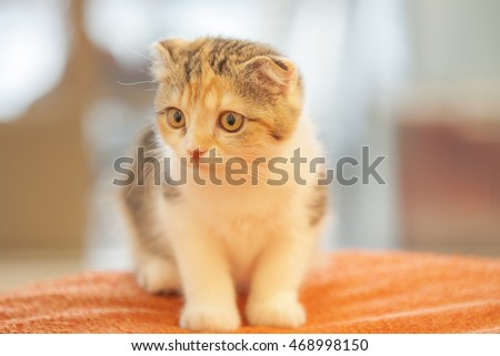 A little cute cat sit on orange sofa