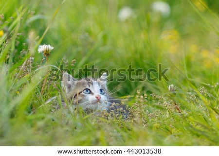A little cute kitten playing in the green grass