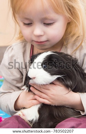 A little cute little girl is playing with a pet. Children and rodents