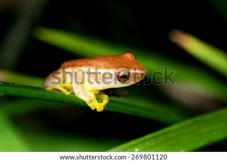 A little frog on leaf - stock photo