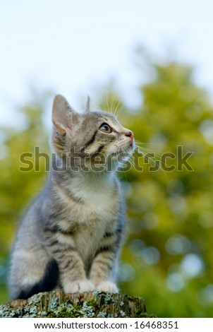 A little grey kitten sits on a post - stock photo