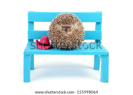 A little hedgehog with red cowboy hat is sitting on a small blue chair. - stock photo