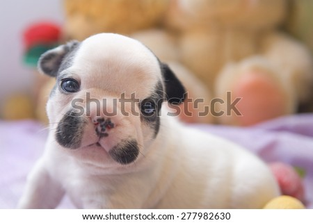a little puppy - stock photo