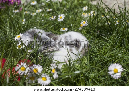 A little rabbit in green spring meadow with flowers on Easter