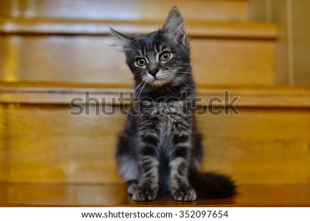a little tabby kitten sitting on the wooden stairs - stock photo