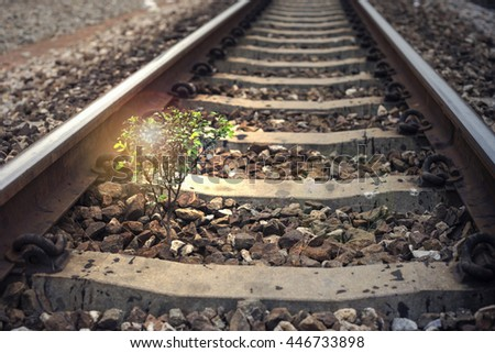 a little tree vegetate among the railway, flare effect added, light effect added ,filtered image,  background,selective focus - stock photo