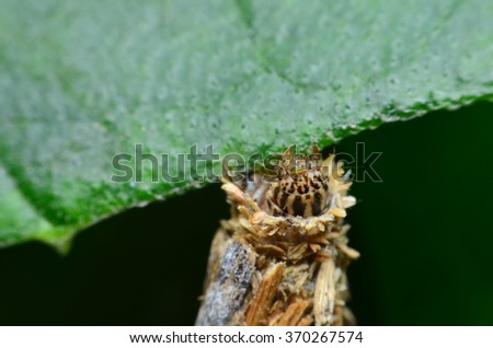 a little worm in wooden case hang on green leaf - stock photo
