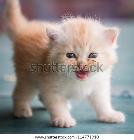 a little yellow color cat - stock photo