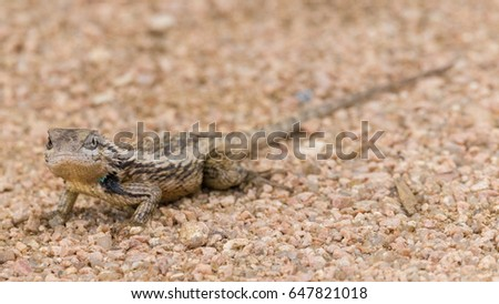 a lizard mostly blended into its surroundings