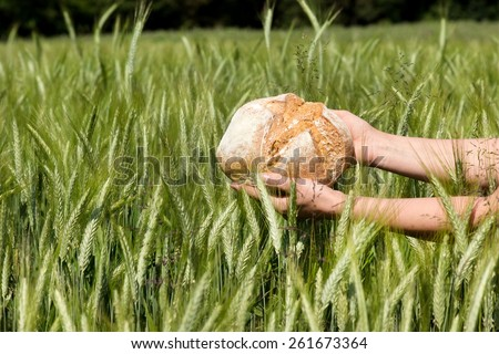 A loaf of bread is held into a cornfield - stock photo