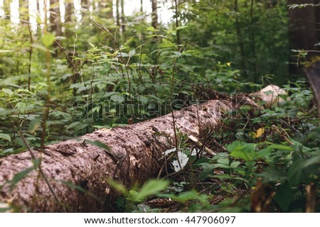 A log of wood in the forest