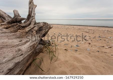 A log on a beach along a lake.  Grand Marais, MI, USA. - stock photo