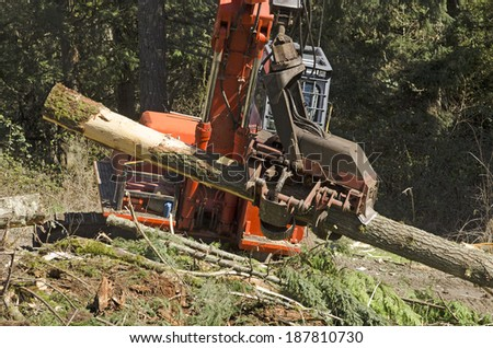 A logging harvesting or processing head is being used to delimb and cut to length logs before stacking - stock photo