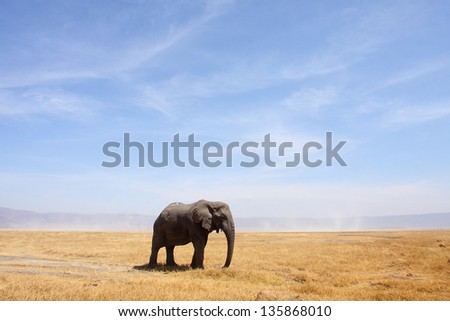 A lone bull elephant stands in the Ngorongoro Crater in Tanzania, Africa.