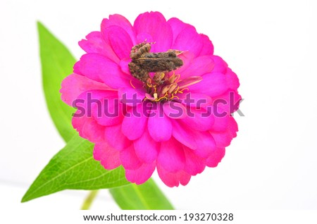 A lone frog sitting on the petal of a pink flower.  - stock photo
