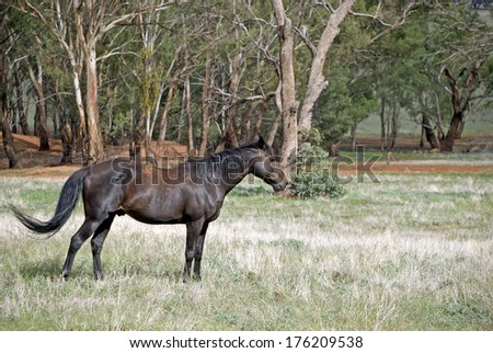 a lone gelding stands proudly in a pasture